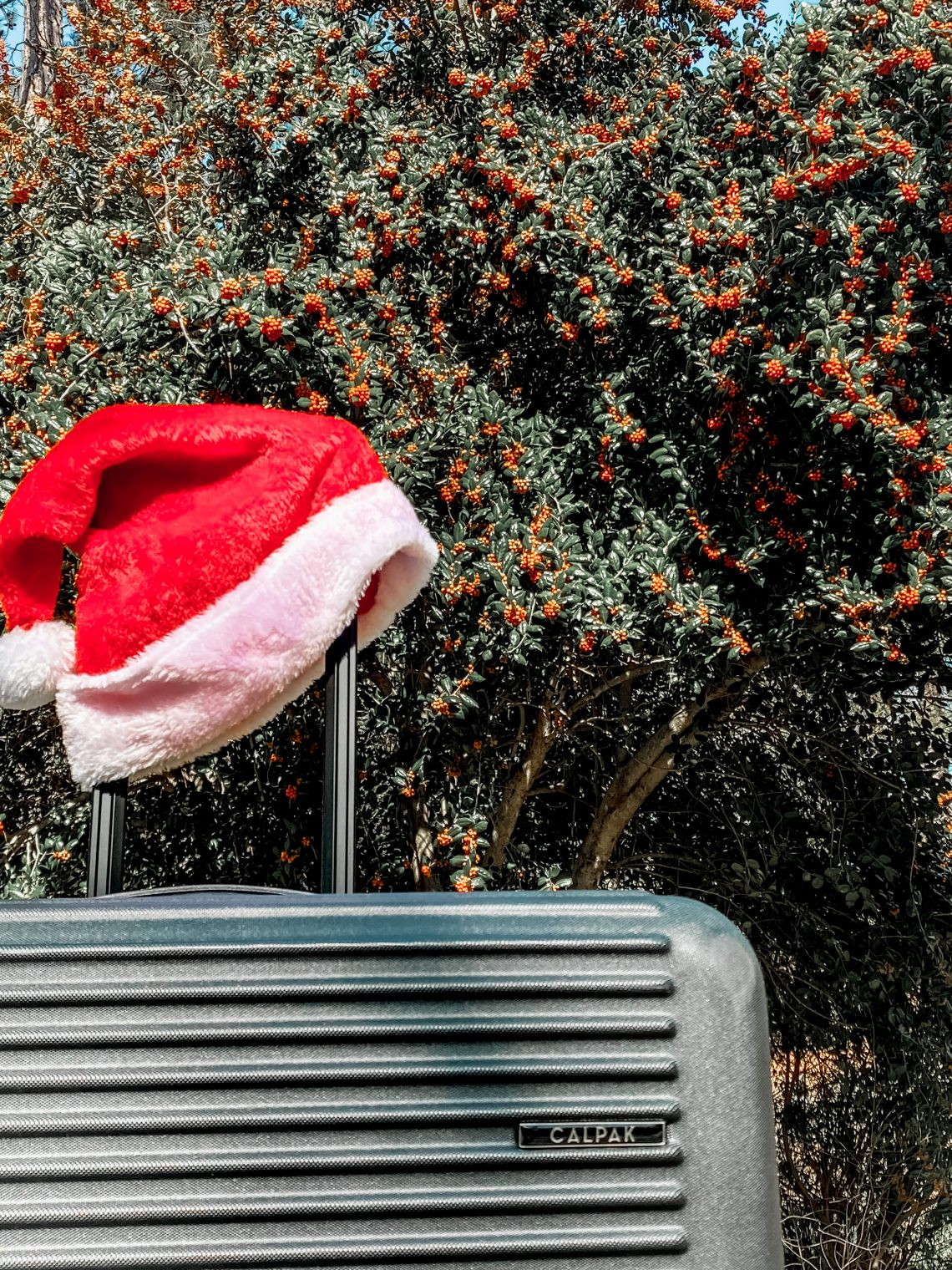 Rolling Luggage with a santa hat on the handle in front of a holly bush/tree